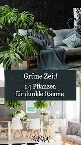 deutschland pflanzen für dunkle räume dunkle