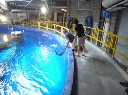 Moody Gardens Assists Texas State Aquarium with Restocking Efforts