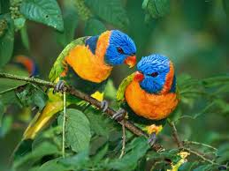 Beautiful Colorful Birds New Fresh Background Wallpapers