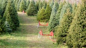 Amazon Is Selling Live 7 Foot Christmas Trees This Holiday Season