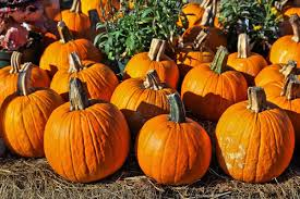 Valas Pumpkin Patch Wedding by Family Activities Sept 15 21 Family Journalstar Com