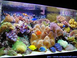 aquarium nano eau de mer aquarium récifal définition et explications