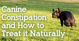 Organic Pumpkin For Dogs Diarrhea by Dog Constipation And How To Treat It Naturally