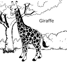 Coloring Pages Of Giraffes