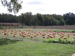 Jumbos Pumpkin Patch Map by Don U0027s Tree Farm 6396 Hickman Road Greenwood De Location