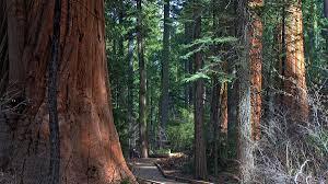 Pumpkin Patch Rv Park Hammond La by Arnold Attractions In California Include Calaveras Big Trees State