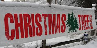 Fraser Fir Christmas Trees Nc by Nc Christmas Tree Farms Christmas Ideas