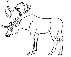 Colouring Deer Antlers