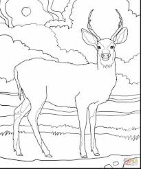 Outstanding Mule Deer Coloring Pages Printable With Page And For Adults