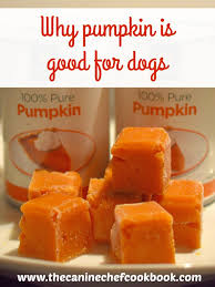 Organic Pumpkin For Dogs Diarrhea by Can Dogs Eat Pumpkin U2014 The Canine Chef Cookbook