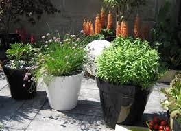 cultiver des légumes sur balcon ou sa terrasse
