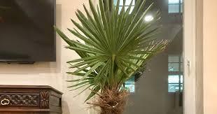 die palme ist im wohnzimmer angekommen blaues haus berlin