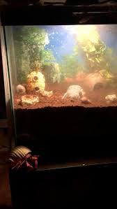 Do Hermit Crabs Shed Their Legs by 176 Best Hermit Crabs Images On Pinterest Hermit Crabs Hermit