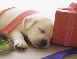 Are Christmas Trees Poisonous To Dogs Uk by Christmas Tree Puppy Safety