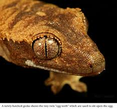 Crested Gecko Shed Box by Jb U0027s Crested Gecko Info