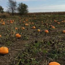Pumpkin Farm Illinois Best by Ben U0027s Giant Pumpkins Attraction Farms 43w200 Jericho Rd Sugar