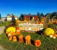 Pumpkin Picking Farms In Lancaster Pa by Meadow View Farms Llc Home Facebook