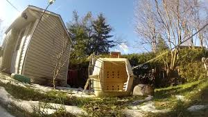 Dog Escapes Backyard Wearing GoPro Camera | Jukin Media 100 Dog Escapes Backyard Run Ideas How To Build A To Guide Install Homer The Beagle Capes Home Heads Kids School Determined Cannot Be Fenced Im Not Stalking You Wearing Gopro Camera Jukin Media Annie The Heat Youtube Escape Artist Climbs Fence Creative Country Scenes Coloring Book For Adults Adult Qa More Help Dogfriendly Gardens Sunset Funny Puppy Kennel