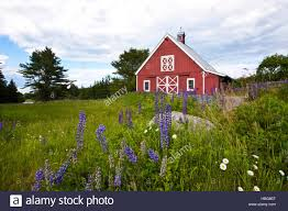 Red Barn And Spring Lupine Meadow Flowers In The Foreground ... The Red Barn At Outlook Farm Wedding Maine Otography Private Events Primo 2017 Wedding Packages In May Part 1 Linda Leier Thomason A Photography Rustic Elegance Photo Credit Focus Tavern Free Images Farm Lawn Countryside House Building Home Tone On Autumn New England And Fence Against Blue Skymount Desert