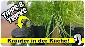 kräuter pflanzen auf der fensterbank tipps tricks pommes män