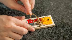 tom cat mouse trap how to set a mouse trap other tips tomcat