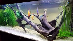 aquarium 7 discus 15 à 18 cms 450 litres