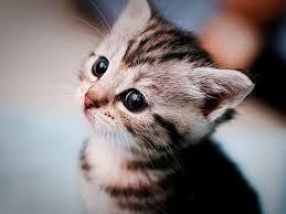 kitty cat a kitty cat 7 by killermiaw on deviantart