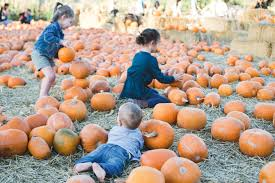 Utah Pumpkin Patch by Pumpkin Days At Wheeler Park The Salt Project Things To Do In