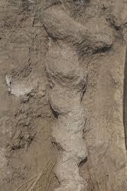 Agate Fossil Beds by Photo Daemonelix John Hawks Weblog