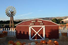 South San Jose Pumpkin Patch by Spina Farms Pumpkin Patch Picture Of Spina Farms Pumpkin Patch