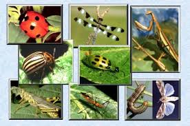 Attracting Insects To Your Garden by Good And Bad Insects In Your Garden Smc Mindspace
