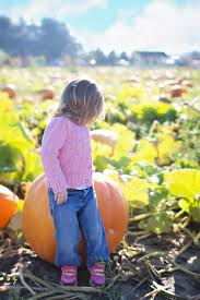 Pumpkin Patch South Bend by Boughter Sinak