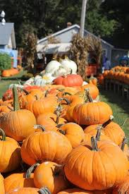 Pumpkin Patch Spring Tx by These Are The Best Pumpkin Patches In Every Southern State