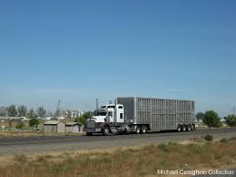 100 Cattle Truck For Sale Ing LLC Kenworth T800 With 4 Axle Livestock Tra Flickr