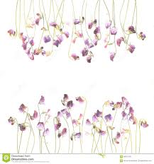 Pretty Violet Watercolor Sweet Pea Flowers Stock Illustration ... Heathcote And Ivory Sweet Pea Honeysuckle Bathing Flowers Sweetpeas Torontos Best Florist Baby Rentals For Your Scottsdale Phoenix Az A Chair That Lasts From Infants To Adults Nuna Zaaz High Parties Decorating Kits Kid In Faux Fur Coat Skirt Sitting On Highchair Holding Amazoncom Gaags Water Resistant Table Cloth Seamless Pattern With Peas Gardening Article Mitre 10 Childcare Pod Natural Titanium Baby High Chair Mini Grey Sweetpea Willow Linkedin Babybjorn