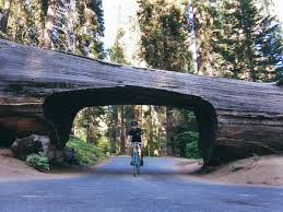 A Three Day Weekend In Sequoia National Park | CA National ... Your Ecommerce Growth Guide 39 Simple Ways To Attract More Outsides Cyber Week Deals Outside Online These Are All The Fourth Of July Sales You Should Know About 7 Black Fridaycyber Monday Email Campaigns And How 10 Different Types Most Effective Marketing Emails How Make Money Blogging In 20 The Ultimate Beginners Krazy Coupon Lady Shop Smarter Couponing Enduring Cold With Huckberry Tyler Wendling Expensive Zip Codes In Us Mapped Digg 2019 Promo Shopping Sales Naked3 Palette Lazy Sundays Now Up 500 Cheaper Thanks This Burrow