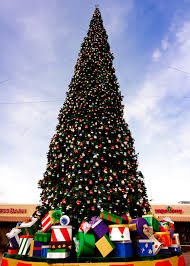 Mother Nature Pumpkin Patch Gilbert Az by Arizona U0027s Tallest Fresh Cut Christmas Tree Arrives Visit Arizona