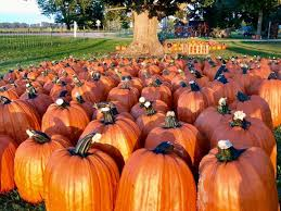 Southern Illinois Pumpkin Patches by 11 Smashing Good Pumpkin Patches Mnn Mother Nature Network