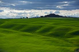 Green Glass Field Tuscany HD Wallpaper