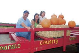 Waimanalo Pumpkin Patch Oahu by A Pumpkin Patch Full Of Family Fun Table Talk Midweek Com