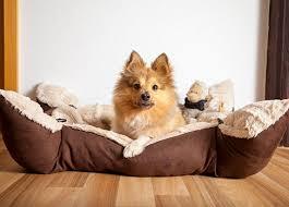 darf der hund mit ins bett regeln fürs schlafzimmer vs