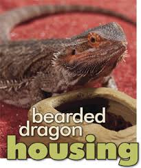 Bearded Dragon Heat Lamp Timer by Habitat Checklist Bearded Dragon Housing