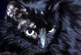 my cat has dandruff ringworm in cats causes prevenetions and cures