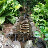 McBryde Garden & Allerton Garden 301 s & 136 Reviews
