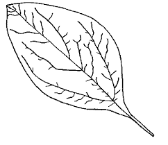 Free Fall Leaf Coloring Pages For Family Road Trips