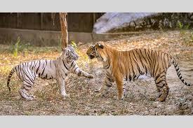 cuisine uip pas cher bruxelles outlook india photogallery zoological conservation parks