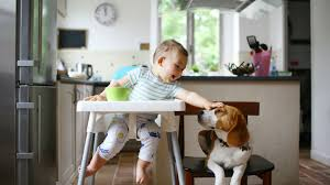Best Highchairs In Australia 2019 | Finder Image Result For 50s Style Patio Fniture Patio Deck Bar Stool Wikipedia Formerly Modern Vintage Wooden High Chair Cosco Step Stool Chrom Metal Red Vinyl Midcentury 2 X Classic Highchair From The 50s Project Trade Me A Guide To Buying Fniture G Van Os Beautiful And New Upholstered Fauteuil Culemborg Set2 Classic Two Tone Replacement Seats Backs From 1950s Suite Renovation Reupholstery Leather Chairs Happy Baby Sitting On Rug Behind Floor Photograph Black White Photo Interior Of 560s With Nightstand Ding Room Lovable Jenny Lind For