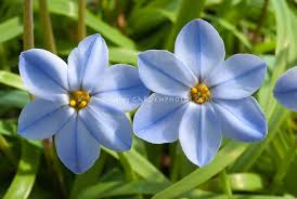 blue flowers images with 55 items