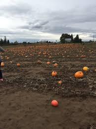 Greenbluff Pumpkin Patch Spokane Wa Hours by Eleven Acres Farms 10909 E Day Mt Spokane Rd Mead Wa Farm Markets