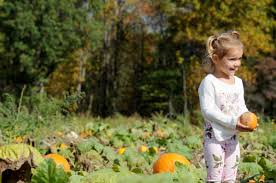 Wheatfield Pumpkin Farm North Tonawanda Ny by Indianagazette Com Local Regional U0026 National News From The